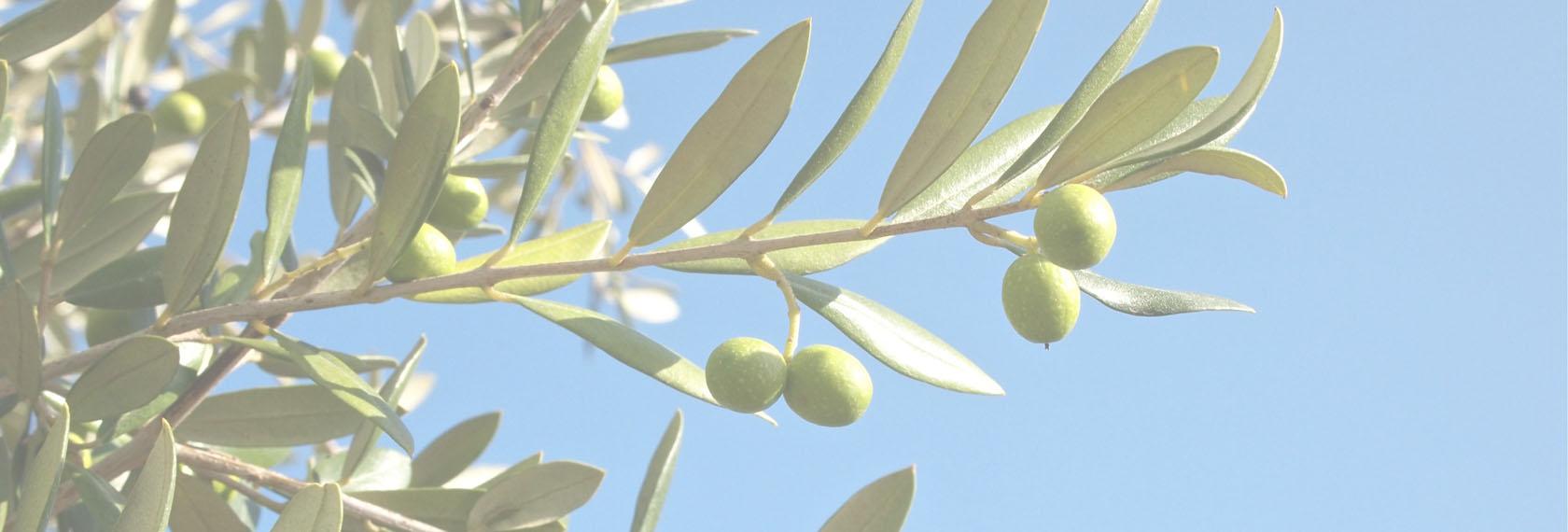 olivier-dimmed